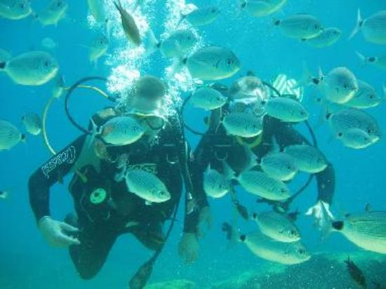 Diving courses in Cyprus