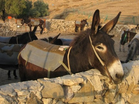 Donkey farm in Cyprus